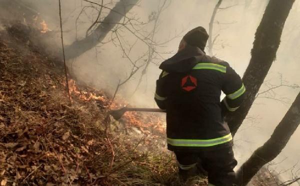 В Грузии 500 спасателей тушат пожар на семи локациях