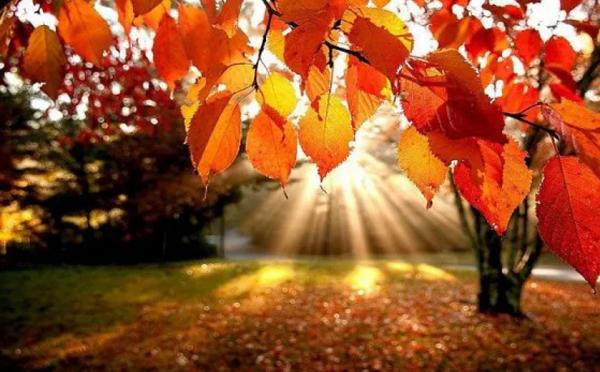 До 25 октября в Грузии сохранится теплая погода без осадков