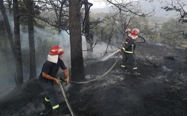 Пожар в Кварельском лесу локализован