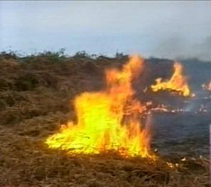 В Западной Грузии выгорела чайная плантация