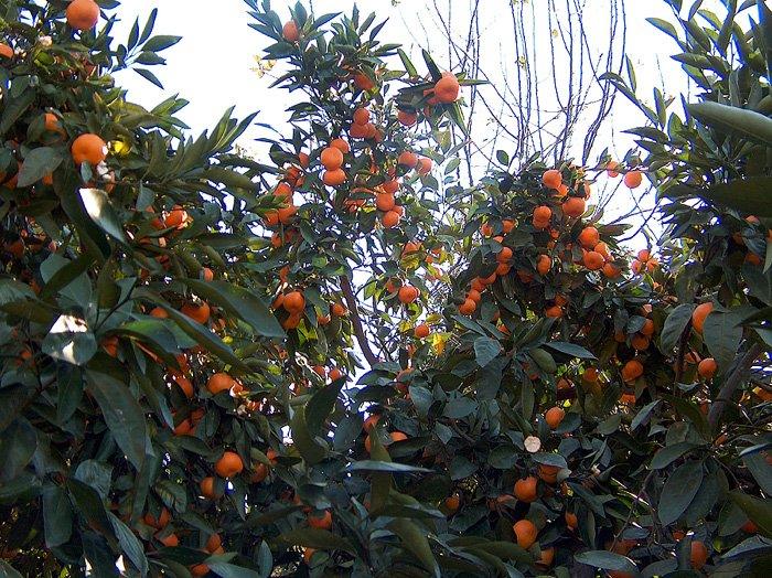 В Грузии начался «оранжевый ртвели»