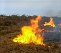 Пожары вспыхнули во всех селах Гурджанского района Грузии