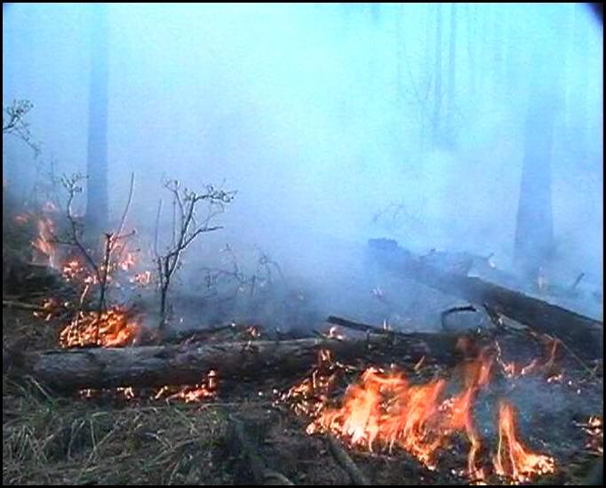 Пожар в Рачинском регионе Грузии пока не потушен